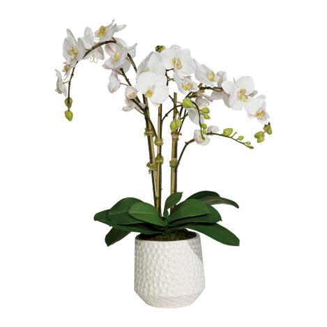 Phalaenopsis in Ceramic Pot ,  , large