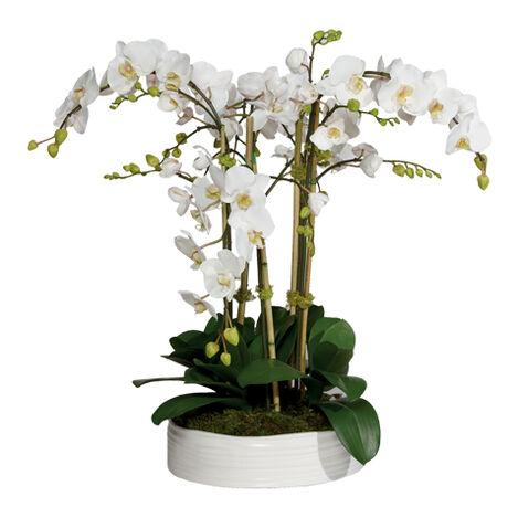 Phalaenopsis in Ceramic Bowl ,  , large
