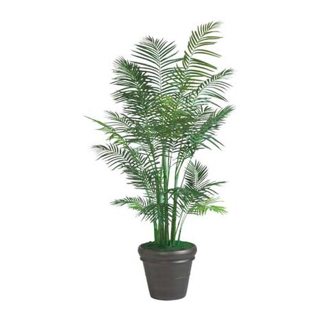 Grand Palmier Areca ,  , large