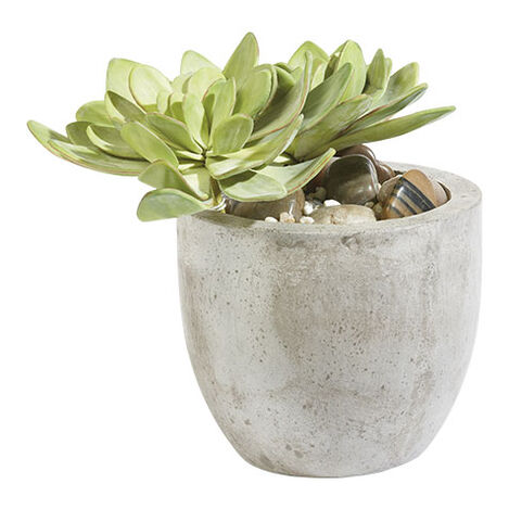 Echeveria in Pot Product Tile Image 444046