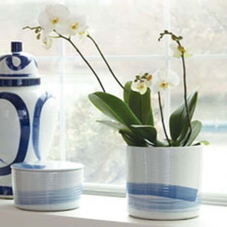Blue and White Lidded Tea Jars Product Tile Hover Image 432090