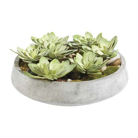 Echeveria in Bowl Product Tile Image 444050