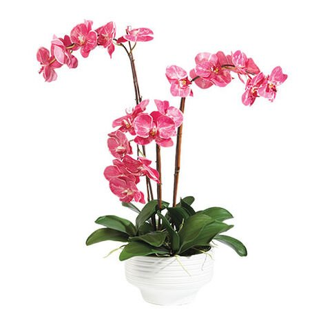 Fuchsia Orchids in Ceramic Pot Product Tile Image 444545