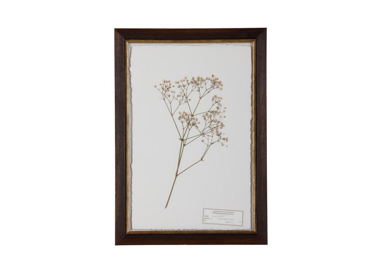 Gypsophila   Pressed Botanicals   Ethan Allen
