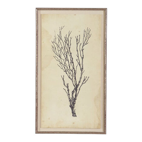 Antique Coral Specimen B ,  , large