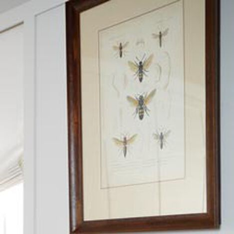Insect Study III ,  , hover_image