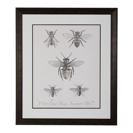 Woodland Insects I ,  , large