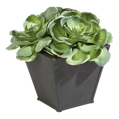 Succulents in Metal Container Product Tile Image 444045