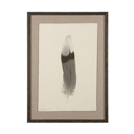 Feather Study III ,  , large