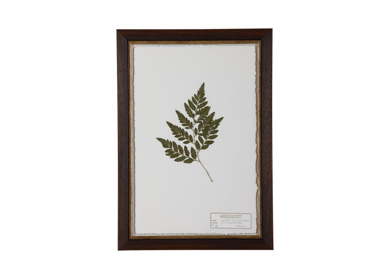 Rumohra Adiantiformis   Pressed Botanicals   Ethan Allen