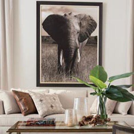Elephant ,  , hover_image
