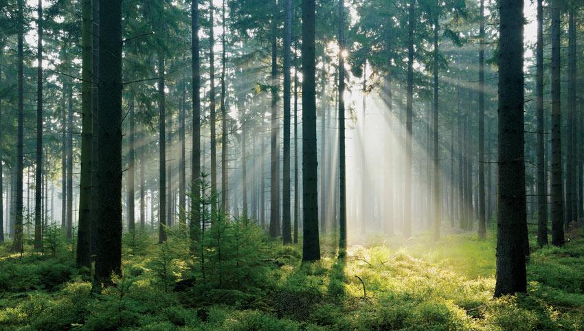 Improving Environmental Impact